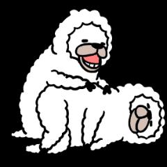 Smiling Alpaca 4
