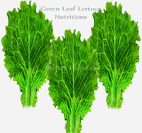 Green Leaf Lettuce Health Nutrition