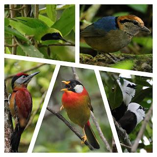 Sumatran Birds