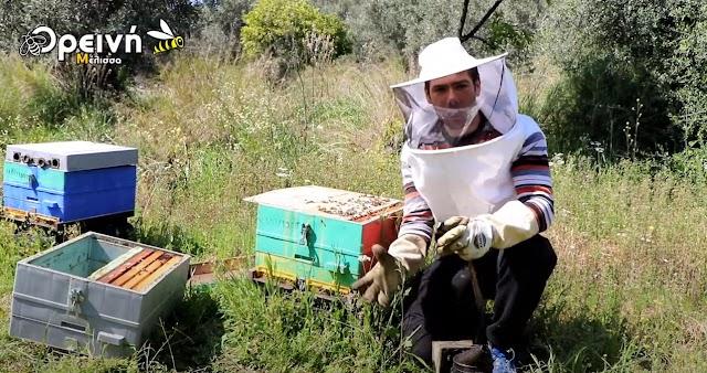 Συνένωση μελισσών: 100% αποδοχή βασίλισσας , για αρχάριους και παλιούς