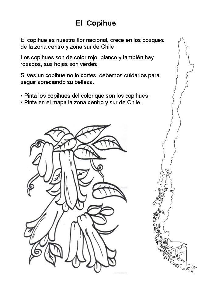 Copihue Para Colorear Colorear Copihue Flor Nacional De