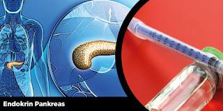 Endokrin Pankreas