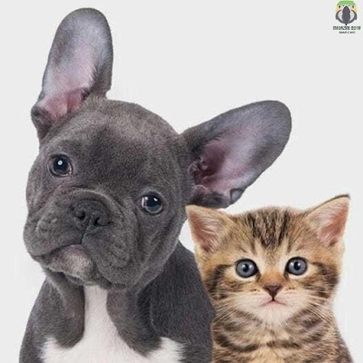 New Ten Interesting Differences Between Dogs and Cats
