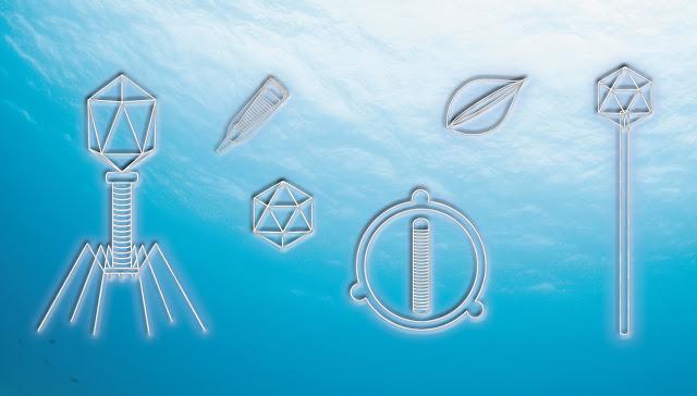Ocean et Virus !