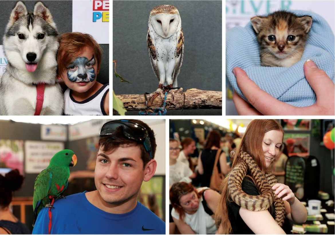 Husky, Owl, Parrot and other pets on display at the Perth Pet Expo