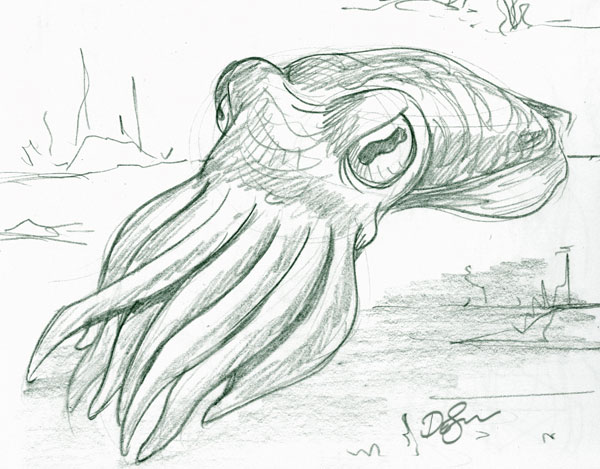 Cute Cuttlefish Drawing