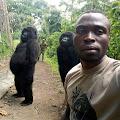 ingat foto gorilla lucu ini? kini ke 12 petugas penjaganya telah tiada.