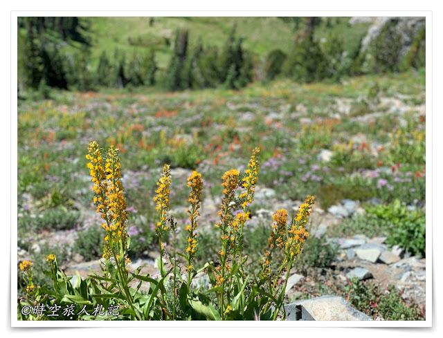 雷尼爾山國家公園Mt Rainier National Park 7