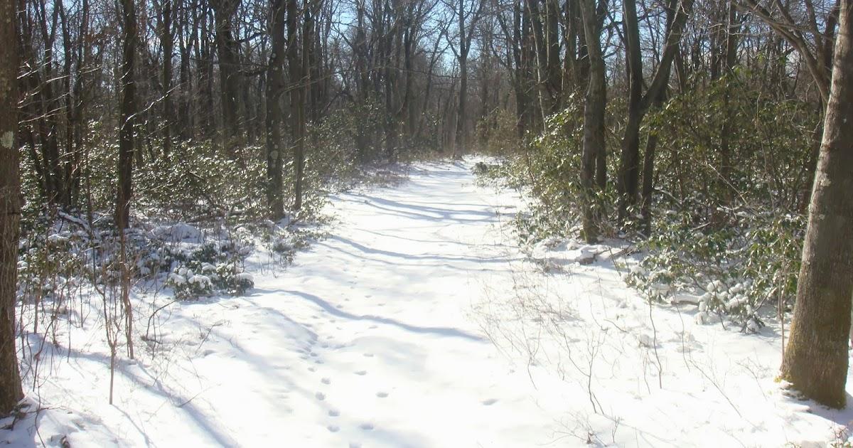 Hiking Mount Davis. Pennsylvania (High Point 10+2/50)