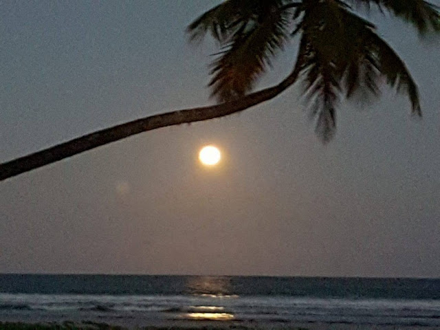 coqueiro na praia ao anoitecer
