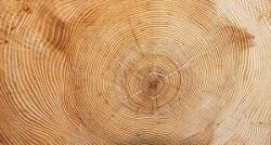Stephanus & Wahyuningrum (2017) mengemukakan bahwa lingkaran tahun merupakan lingkaran pertumbuhan yang ada pada batang yang berkembang setiap tahun membentuk lingkaran yang baru dan dapat dijadikan sebagai dasar untuk memnentukan umur pohon. Menurut Sunardi (1977), lingkaran tahun yang terdapat pada kayu dapat dibedakan menjadi lingkaran tahun normal dan lingkaran tahun abnormal.