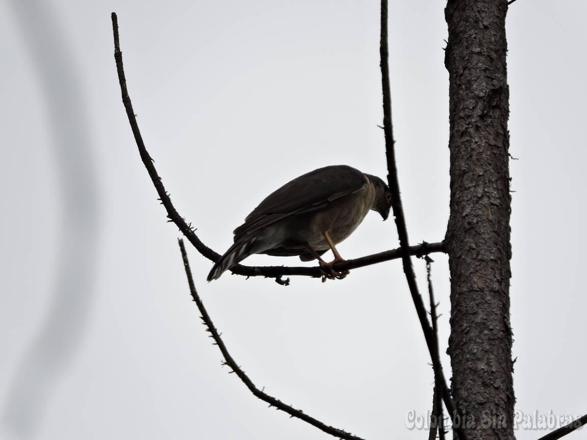 ave del cerro quitasol