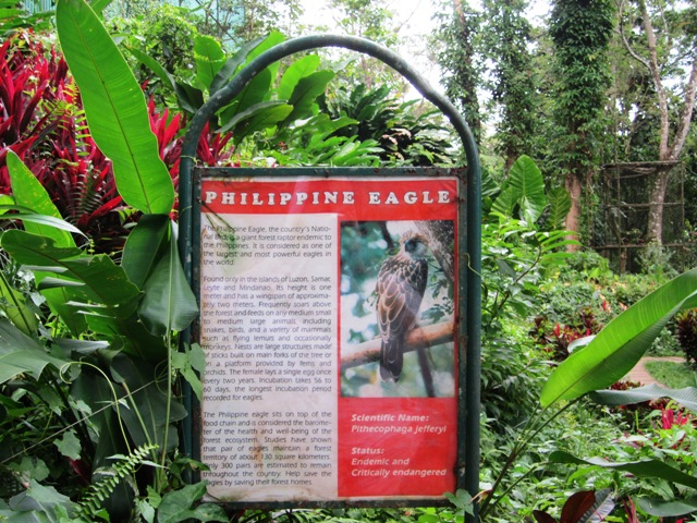 philippine eagle davao, davao tour, davao tours, around davao, davao city, davao city tourist attractions, what to do in davao, where to go in davao city, davao eagle