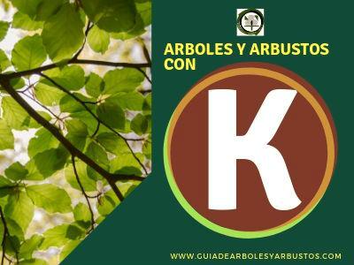 Arboles y arbustos que empiezan por k
