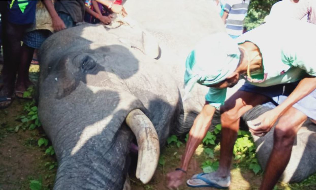 झारखंड के सिमडेगा में बिजिली के चपेट में आने से जंगली हाथी की मौत