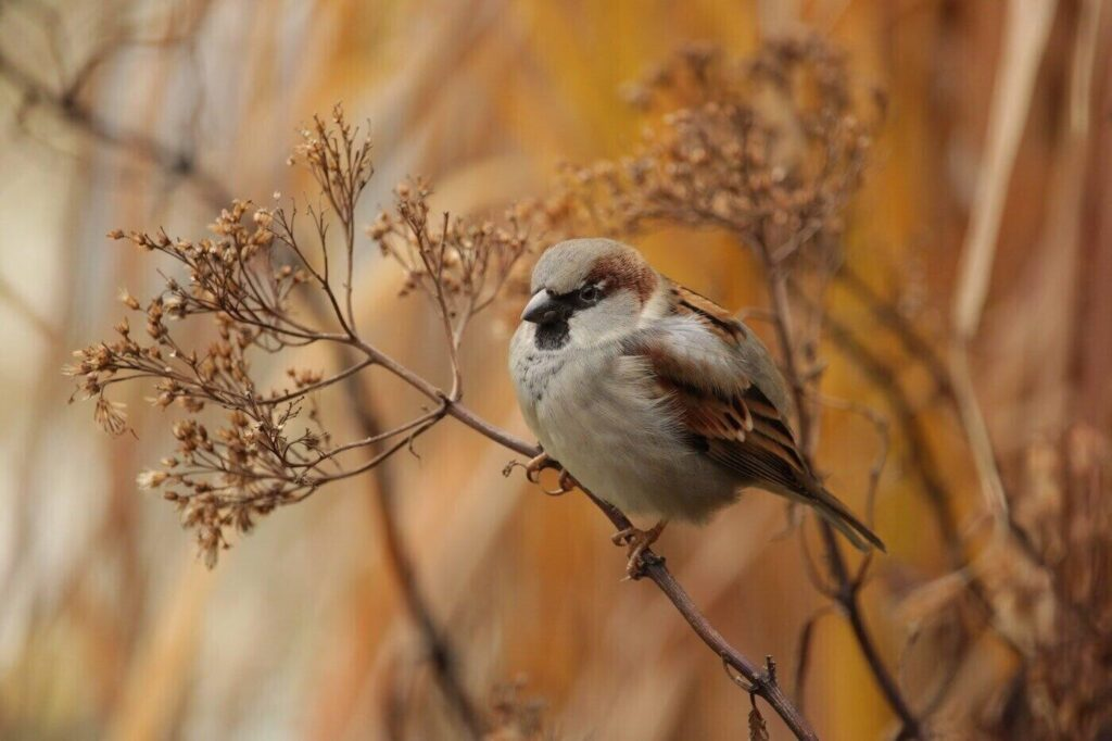 Birdwatching Tips For Fall