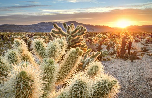 Here&Now Road Trip: Joshua Tree National Park