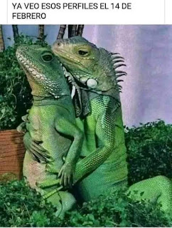 Memes San Valentín día lagartos abrazados