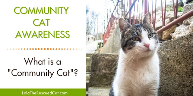 what is a community cat?