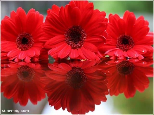 صور خلفيات - خلفيات ورد 12   Wallpapers - Flowers backgrounds 12