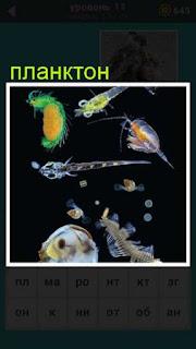 в воде плавает планктон в игре 667 слов 11 уровень