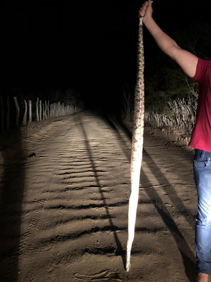 Jiboia de grande porte é encontrada morta em estrada na Zona Rural de Santa Cruz do Capibaribe