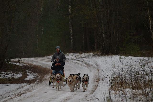 Dog sledding dog karting Discover Latvia Riga Winter activity