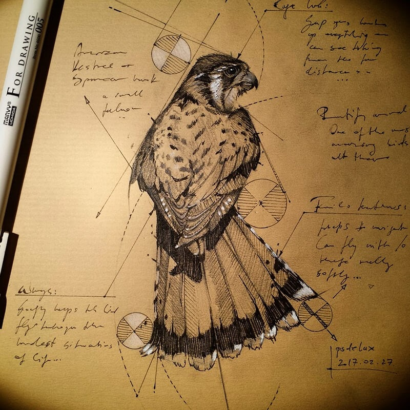 01-Hawk-Traditional-Sketch-psdelux-Geometric-Animal-Sketches-and-1-Alien-www-designstack-co