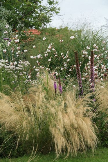 Nassella tenuissima, Liatris spicata, Gaura lindheimerii, Panicum virgatum, Pycnanthemum tenuifolium