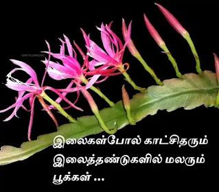 epiphyllum flower for  leaf