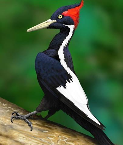 birds: endangered or extinct on Pinterest | Extinct ...