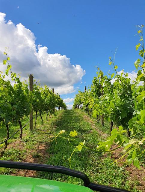 Boscato Vinhos Finos