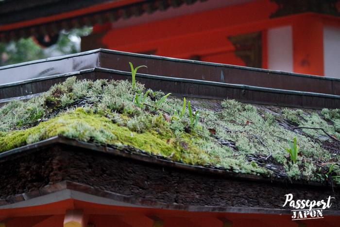 Toit recouvert de mousse, détail, sanctuaire Usa-jingû, Oita