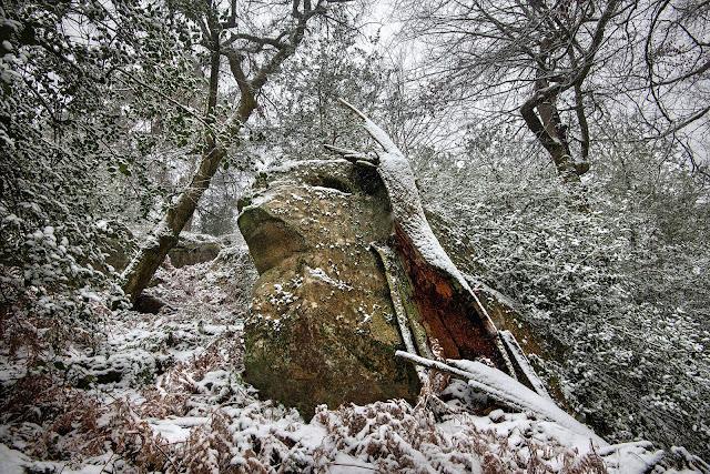 Gorge aux Loups, forêt de Fontainebleau.