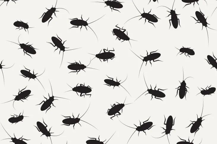 3 نصائح غير سامة لتخليص منزلك من الصراصير