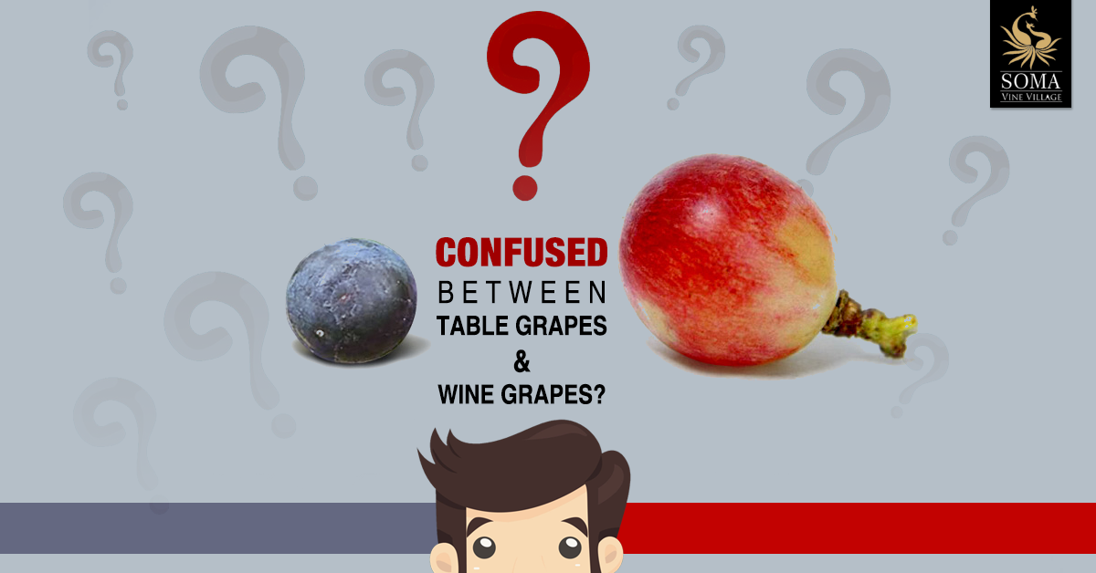 Soma vine village nashik confused between table grapes - Difference between wine grapes and table grapes ...