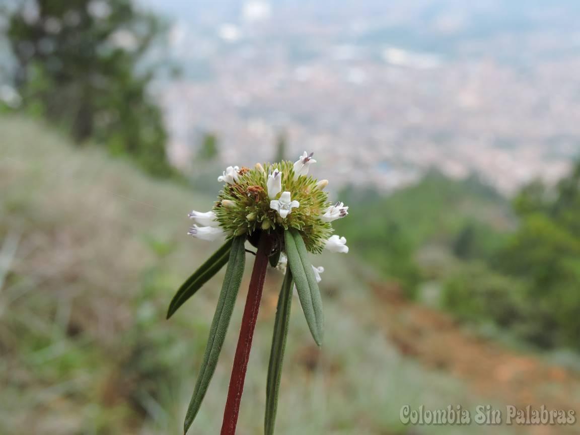 pequeñas flores en medio del cerro quitasol