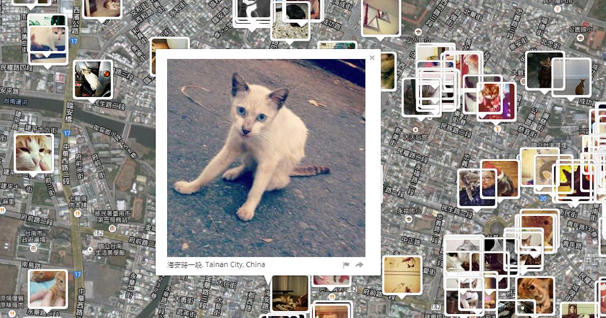 全世界的貓咪都躲在哪裡?就在你我身邊的尋貓地圖