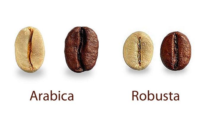 perbedaan kopi robusta dan arabika