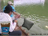 Umpan Ikan Lele Khusus Kilo Gebrus