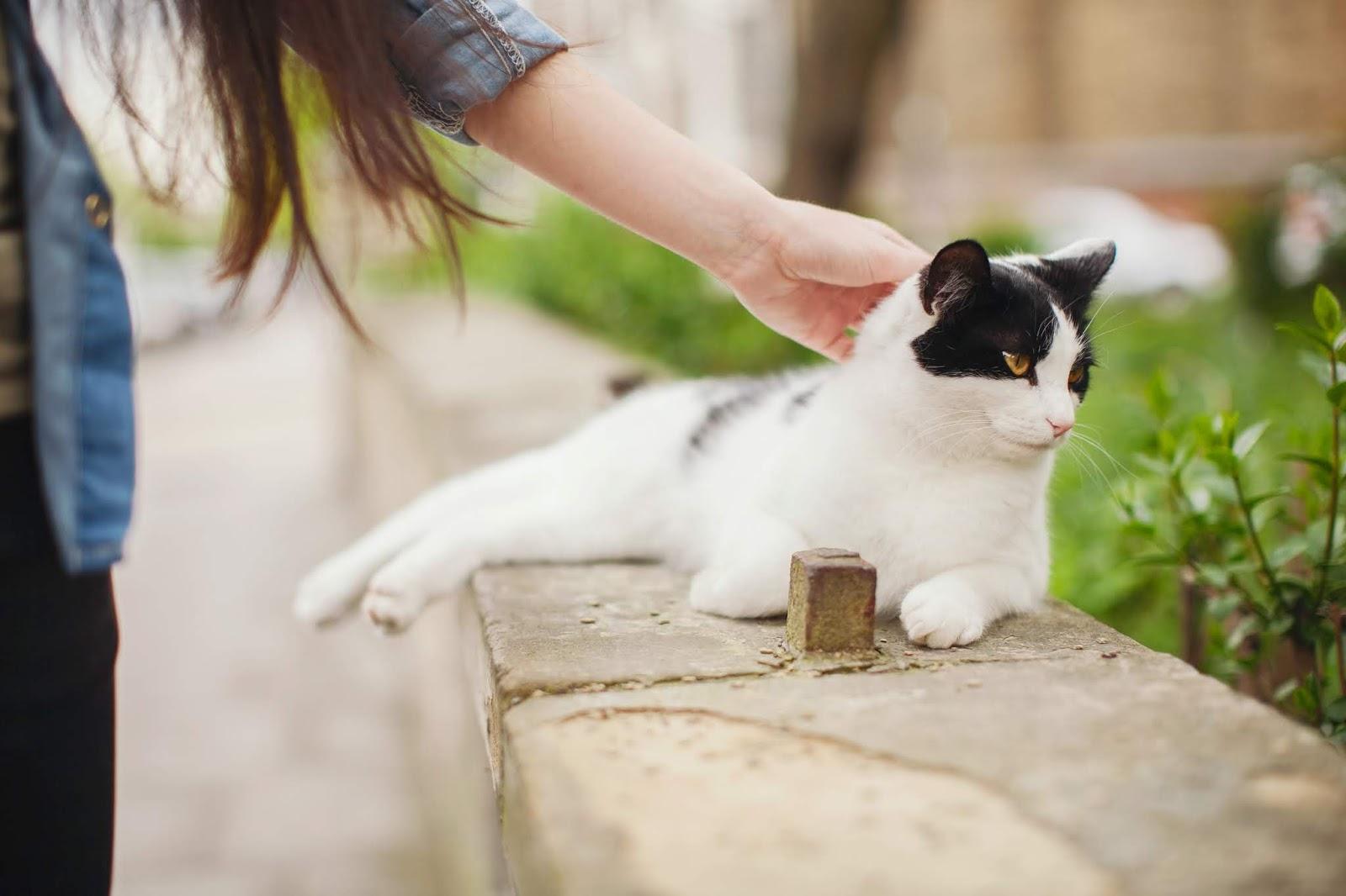 Cat Anime Girl