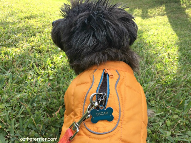 kurgo loft dog jacket has zipper to attach leash to harness