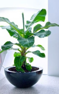 8 Vastu Plants and Trees For Home Which Brings Happiness and Remove Negativity