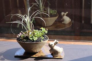 半月の陶盤の上にのった楕円型の鉢の山野草盆栽とうさぎの人形