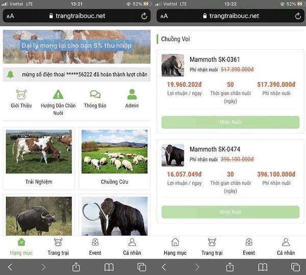 Góc làm giàu không khó, chỉ cần nuôi voi ma mút và bò Úc