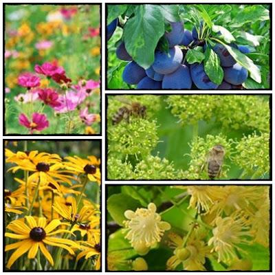 Miejsce przyjazne pszczołom, motylom i innym pomocnikom ogrodów. Jak zachęcić zwierzęta do zaglądania do naszej przestrzeni?