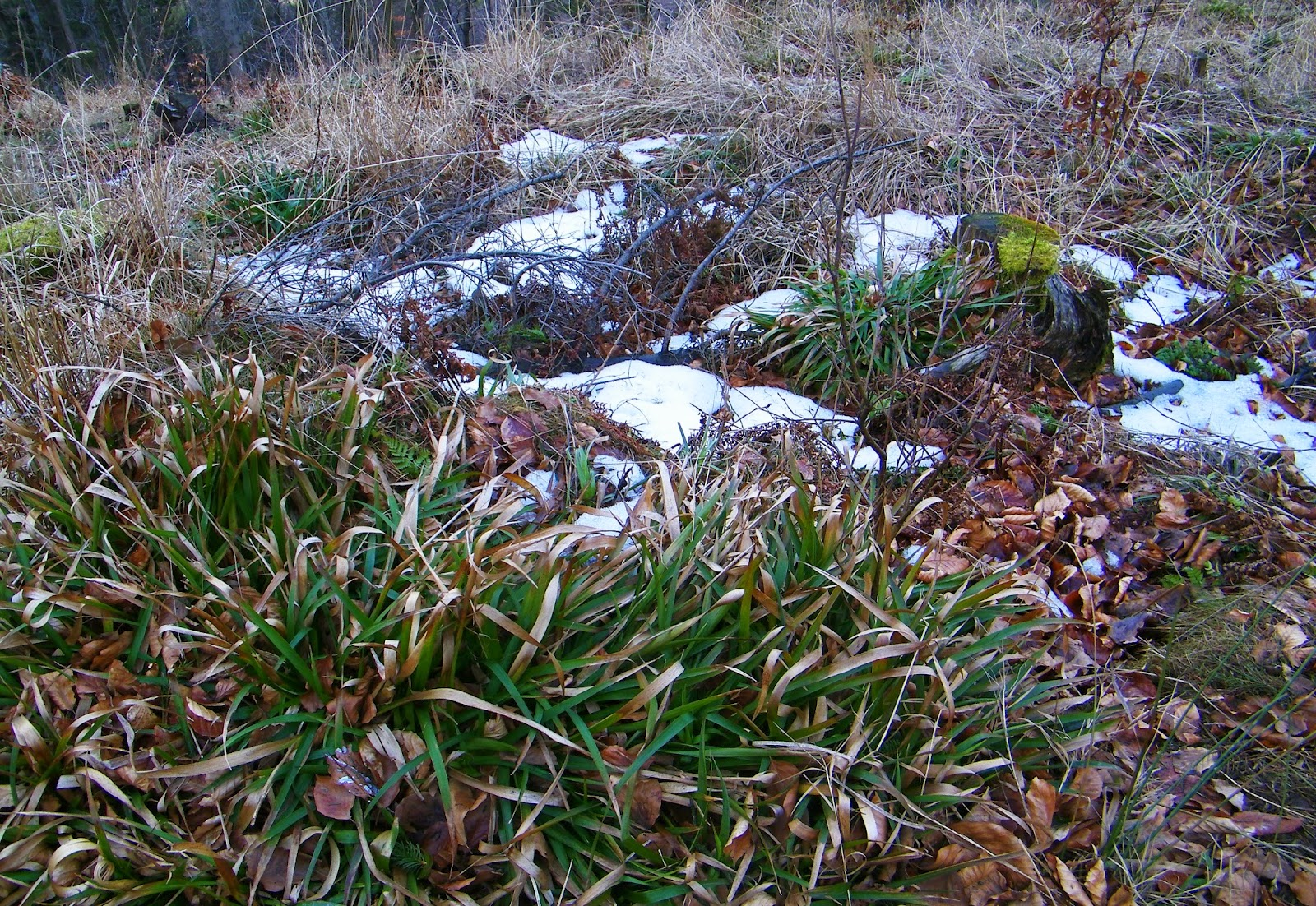 Beskid Mały - szlak na Czupel