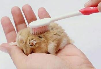5 Tips Merawat Hamster dengan baik