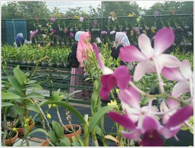 Kebun Anggrek Astuti;10 Top Destinasi Wisata Nganjuk