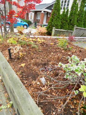 Bedford Park Fall Cleanup Front Yard After by Paul Jung Gardening Services--a Toronto Organic Gardening Company